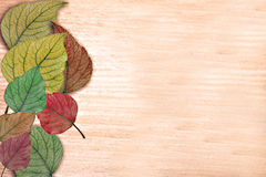 Background with the multi-coloured leaves Stock Photography