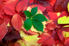 Background of multicolor autumn leaves Stock Photo