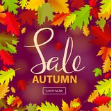 Background with multicolor autumn leaves. Vector illustration. Royalty Free Stock Photo
