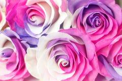 Background of multicolor roses. Purple, purple, cream, pink colors stock photos
