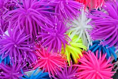 Background of Multicolor Rubber or Silicone Sea Anemone Royalty Free Stock Photos
