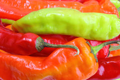 Background of multicolored chilli-peppers Stock Image