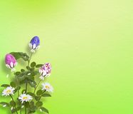 Background with multicolored eggs Royalty Free Stock Photos
