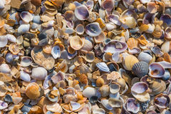 Background multicolored small seashells Royalty Free Stock Image