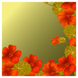 Background with nasturtium for design cards and invitations. Garden orange flower Stock Photo