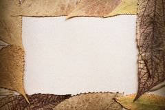 Background and natural frame of dry autumn leaves. Natural texture and color scale Royalty Free Stock Photos