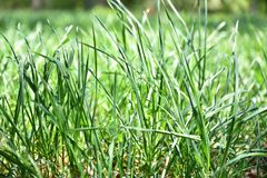 Background natural green lawn. For recreation. Stock Photography