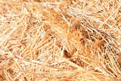 Background The natural texture of dry straw. Photo picture Background of The natural texture dry straw royalty free stock photography