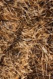 Background The natural texture of dry straw. Photo picture Background of The natural texture dry straw stock photos