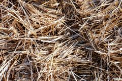 Background The natural texture of dry straw. Photo picture Background of The natural texture dry straw stock photo