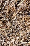 Background The natural texture of dry straw. Photo picture Background of The natural texture dry straw royalty free stock images