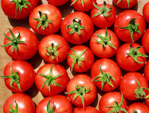 Background of natural tomatoes Stock Photography