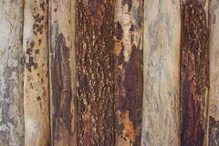 Background of natural wood Stock Photography
