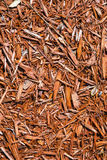 Background of natural wood shavings Stock Image