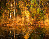 Background of nature, beautiful autumn leaves on forest lake Stock Image