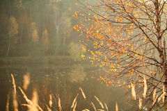 Background of nature, beautiful autumn trees on forest lake Stock Photography