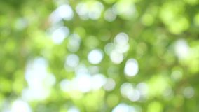 Nature background with beautiful green bokeh circles.