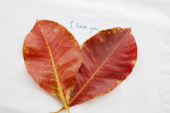 Background nature red leave on background white Royalty Free Stock Photos