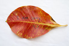 Background nature red leave on background white Royalty Free Stock Photo