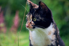 Ð¡at on a background of nature. Variegated cat on a background of nature stock photo