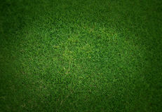 Background of the neat green grass. Up view Royalty Free Stock Photography