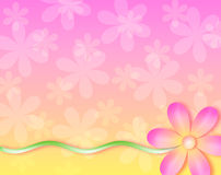 Background - no wall flower. A bright flower stands out from the background. Great for web, print, cards, etc Royalty Free Stock Image
