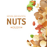 Background with nuts vector illustration