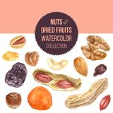 Background with nuts and dried fruits. Background with watercolor nuts and dried fruits stock illustration