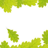 Background with oak leaves Stock Photos