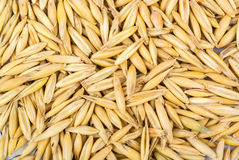 Background of oats Stock Photos
