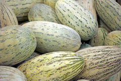 Background of oblong melons Royalty Free Stock Photography