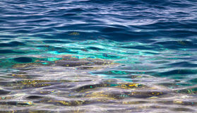 Background of ocean floor in tropical green waters Royalty Free Stock Photos