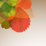 Background Of Leaves Design Stock Photos