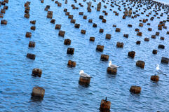 Background Of Old Dock And Gulls Stock Image