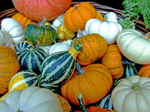 Background Of Pumpkins Royalty Free Stock Photos