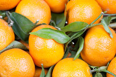 Free Background Of Satsumas Royalty Free Stock Photos - 29740648