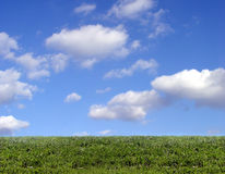 Background Of Sky And Grass Royalty Free Stock Photography