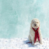 Background ofWinter Scene Dog sitting in snow Stock Photo