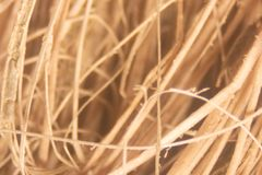 Close up Oil palm fiber under the microscope for Chemical analysis in Lab. Background Oil palm fiber, Close up Oil palm fiber under the microscope for Chemical royalty free stock photos