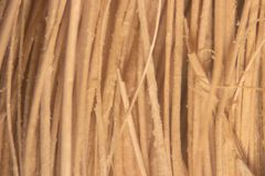 Close up Oil palm fiber under the microscope for Chemical analysis in Lab. Background Oil palm fiber, Close up Oil palm fiber under the microscope for Chemical royalty free stock image