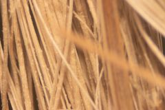 Close up Oil palm fiber under the microscope for Chemical analysis in Lab. Background Oil palm fiber, Close up Oil palm fiber under the microscope for Chemical stock photos