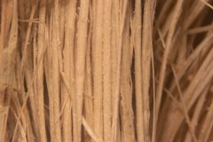 Close up Oil palm fiber under the microscope for Chemical analysis in Lab. Background Oil palm fiber, Close up Oil palm fiber under the microscope for Chemical stock photo
