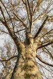Background of old autumn tree in mountain forest. Autumn scene w Stock Photo