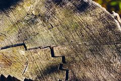 Background of old cracked stump royalty free stock photos