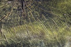 Background from old cut tree. Wooden Texture background royalty free stock images