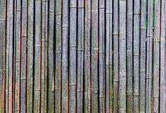 Background of an old and dry bamboo fence Royalty Free Stock Images