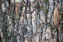 Background of old Linden bark on a clear Sunny day. stock photos