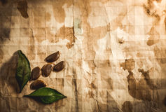 Background with old paper Royalty Free Stock Images