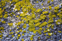 Background old stone wall texture with moss Stock Photo