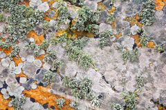 Background of old stone wall texture Stock Image